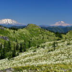 Silver Star Mountain and Indian Pits Beargrass